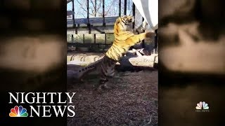 Topeka Zookeeper Hospitalized After Tiger Attack | NBC Nightly News