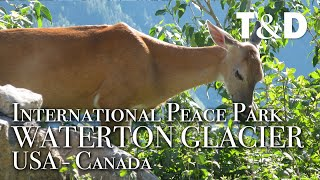 Waterton-Glacier International Peace Park Video Guide - Travel & Discover