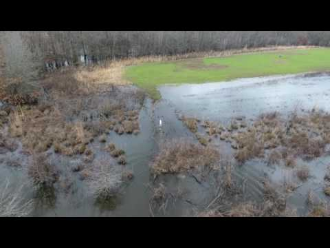 Hog Hunting with drone