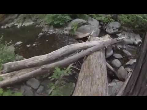 Gold Prospecting Little Grizzly Creek in Plumas County California Part II