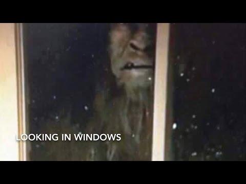 Common Bigfoot Behaviors.