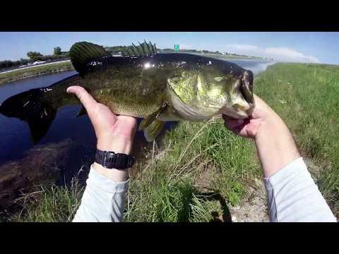 23 July 2019  Peacock Bass, Snakehead & Largemouth Markham Park