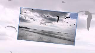 """Волны,птицы,дельфины. Программа """"Видео Шоу"""""""