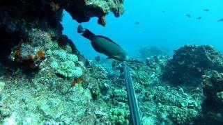 Spearfishing Hawaii (the lost files)