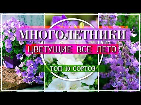 10 ПОТРЯСАЮЩИХ МНОГОЛЕТНИКОВ  Цветущие ВСЕ ЛЕТО