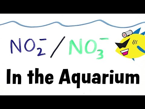 Nitrite And Nitrate In The Aquarium