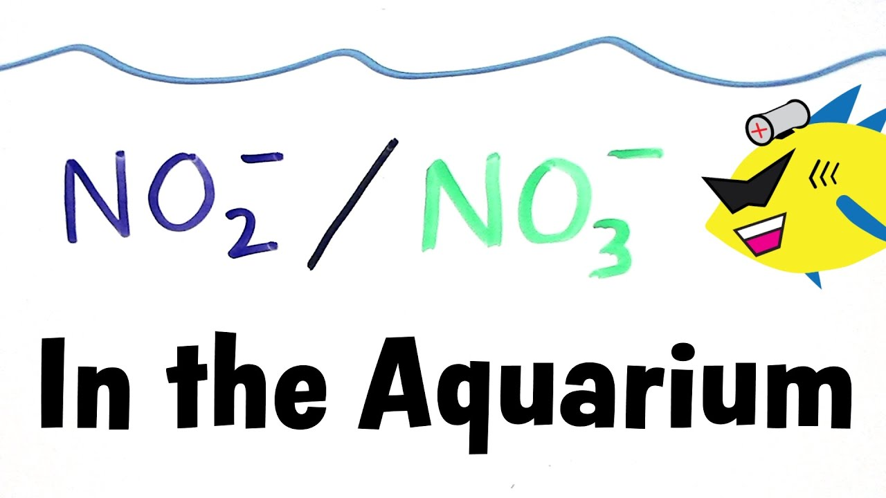 Nitrite and nitrate in the aquarium youtube buycottarizona