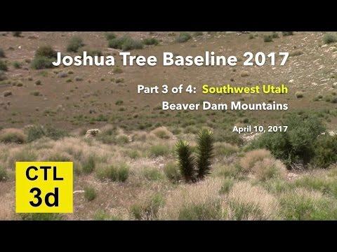 Joshua Tree Baseline videos 2017 - pt 3 SW Utah Beaver Dam Mtns