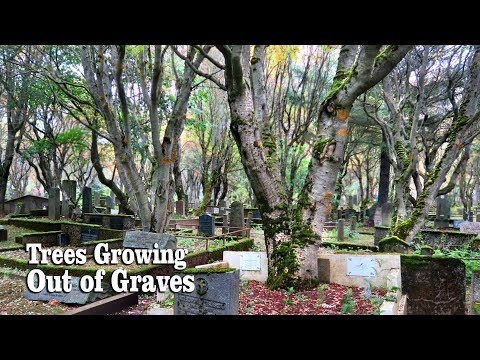 Eerie and Enchanting Iceland Cemetery