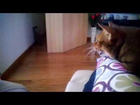 purina beyond cat food reviews