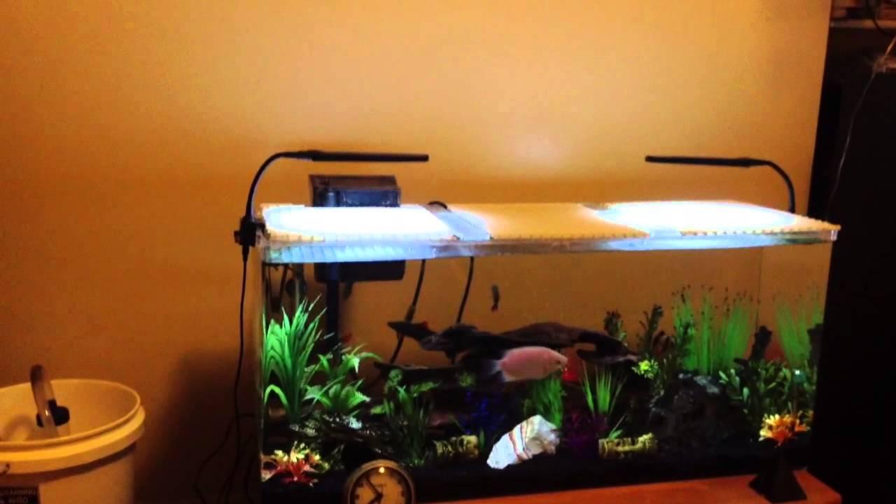 Seaclear Acrylic Aquarium