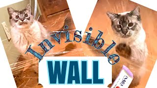 Cat vs Invisible Wall Compilation Part I   [Balinese cat : hypoallergenic cat breed]