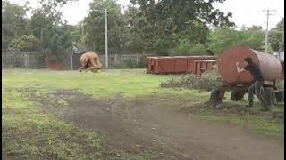 Criatura Demoniaca Grabada en video 2017