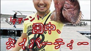 【進髭】真鯛を釣って全力タイパーティーする【三浦半島②】