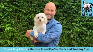 Maltese Dog Breed Profile  dog breed facts and training tips| S5 Ep8 | Pooches at Play