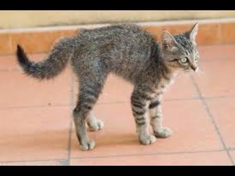funny video cat مقطع طريف جداااا
