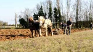 Journée labour par traction animale en Vals de Gartempe et Creuse