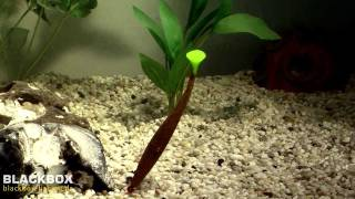 Angeln mit Gummis: Unterwasser