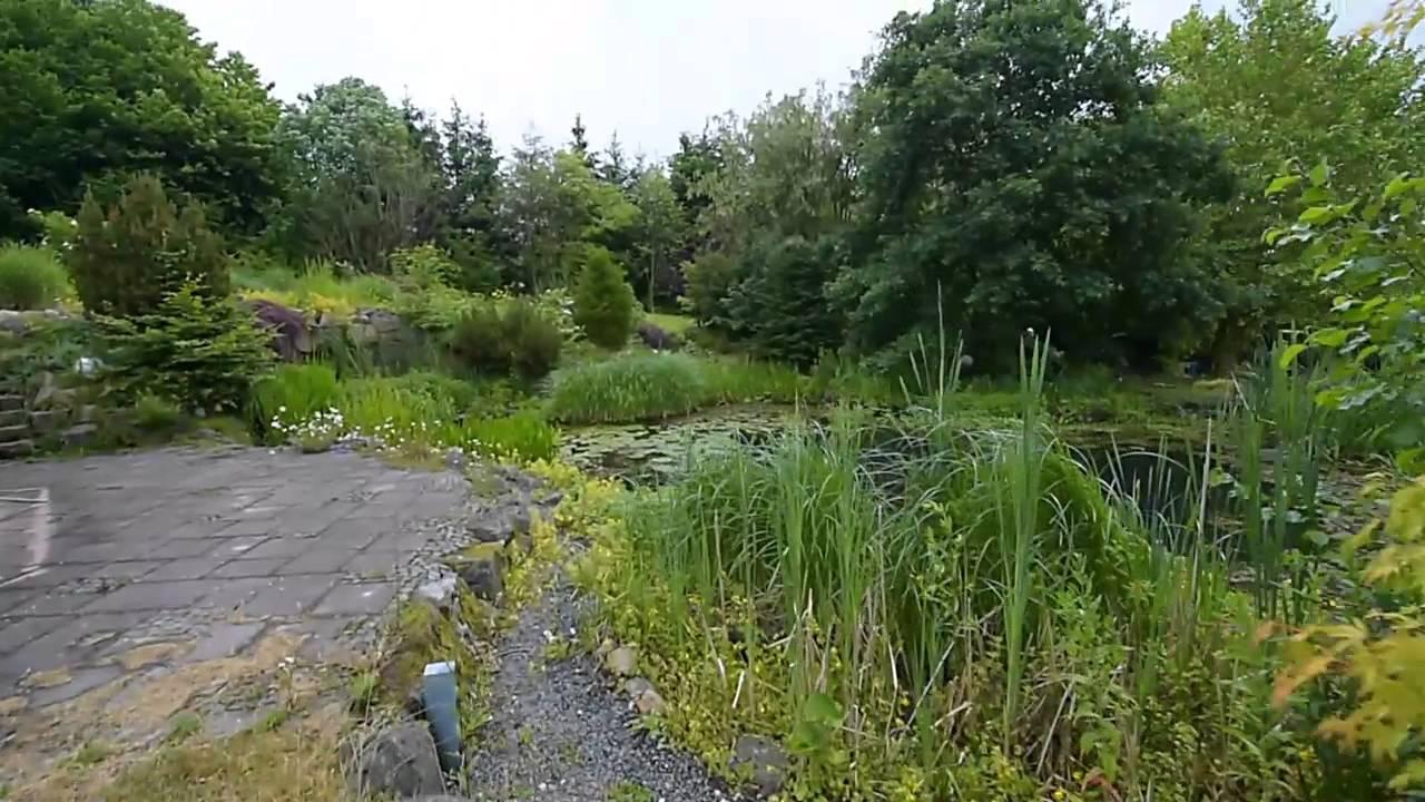 Modern Koi Blog #292   Traumhafter Naturnaher Gartenteich