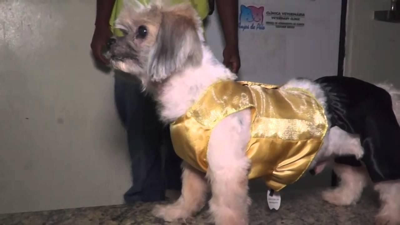 Carnaval: lojas investem em fantasias para animais de estimação