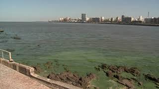 Cianobacterias y peces muertos, así están las playas de Montevideo