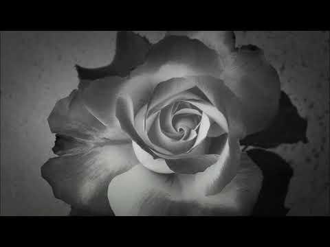 Розы Кубани