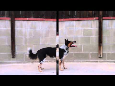 BACK FLIP DOG