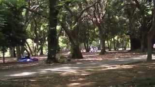 Quiet Places in Tokyo - Yoyogi Park + Harajuku