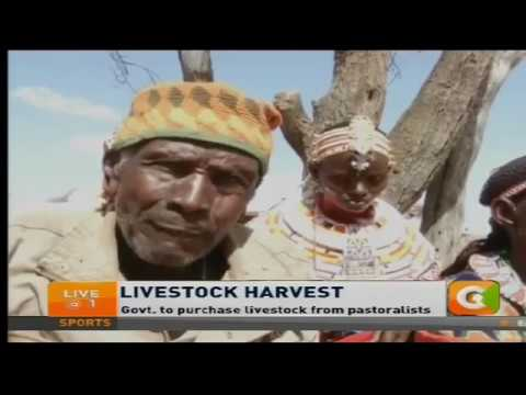 Govt. to purchase livestock from pastoralists
