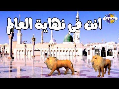 هدم الكعبة ودخل الأسود المسجد النبوي في أخر الزمان ؟!