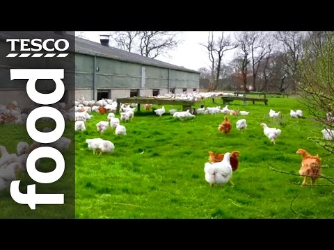 The Story Of Our Free-Range British Chickens | Tesco Food