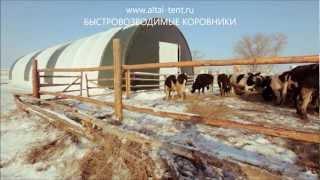 Холодное содержание телят, бычков, коров, КРС на откорм