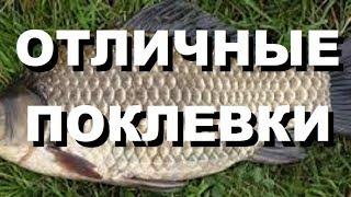 видео Ловля карася на фидер + ВИДЕО - Рыбалка, охота, отдых и туризм.