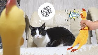Cat's reaction to Screaming Chicken!