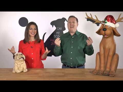 Can My Dog...? Show - Holiday Safety and Holiday Wishes!