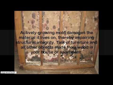 what kills mold on wood -