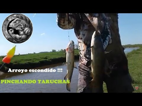 TARUCHAS PARTE #2 | ARROYO ESCONDIDO | RECORRIENDO EL SAMBOROMBON
