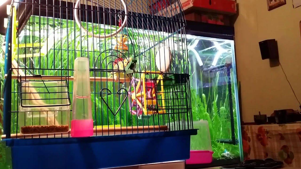 Игрушки для попугаев — это отличный способ скрасить одиночество птицы, когда вас нет рядом. В магазине вы сможете купить удобные и надежные качели и зеркала для попугаев. Наш магазин предлагает широкий ассортимент игрушек для маленьких, средних и больших попугаев по шаровой цене с.