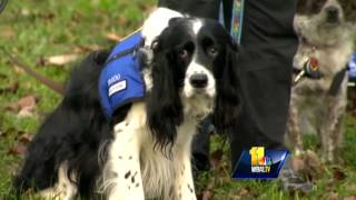 Md. Therapy Dogs To Help Sandy Hook Community Cope