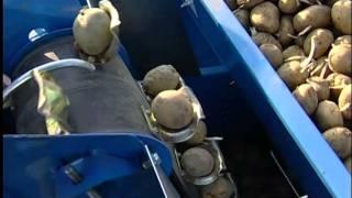 Repeat youtube video F.LLI SPEDO - SEMINA PATATE AUTOMATICA EUROPA