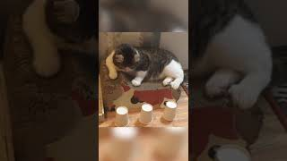 This kitty is genius! (via @curlysnow0915) #TrainYourBrainDay