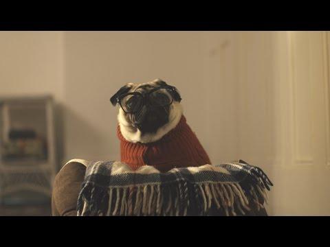 Vision Direct Christmas Advert 2015 – A Pug's Christmas
