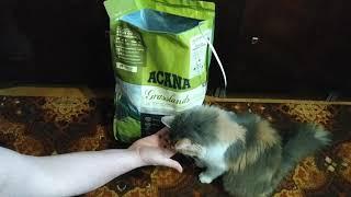 Акана для кошек. Кошачий корм Акана вскрытие упаковки. Кошка ест корм Акана.