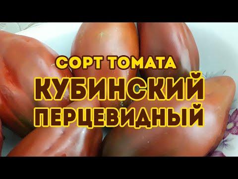 Сорт томата Кубинский перцевидный! Обзор томата   перцевидныи   томатов_2020   урожайные   кубинскии   томатов   рассаду   протажа   помидор   томаты   семена