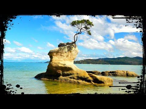 The OTHER Famous New Zealand Tree 🇳🇿 That MARAHAU Tree - Abel Tasman National Park