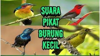 Download lagu Suara pikat semua burung kecil MP3