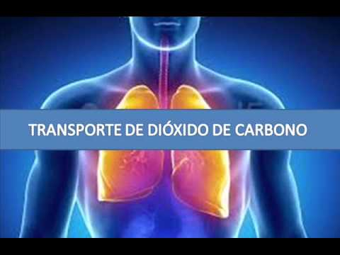 Image Result For Monoxido De Carbono