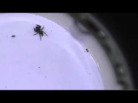 クモ みたい な 虫