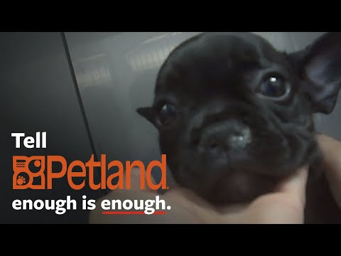 Shocking Undercover Investigation At Petland!