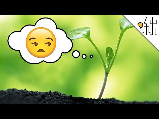 植物也有感覺? 還知道自己正在被啃食! | 一探啾竟 第12集 | 啾啾鞋